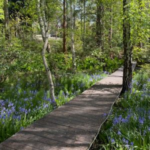 shaded foot path with bluebells